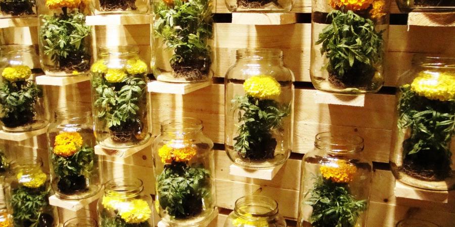Zdjęcie przedstawia ścianę z europalet, jasne drewno nieheblowane, na której na małych podpórkach ustawiono słoiki w których zasadzono rośliny. Na jasnym tle szczególne odznaczają się pomarańczowe kwiaty oraz ziemia z systemem korzeniowym, który bardzo dobrze widać przez szkło osłonki.