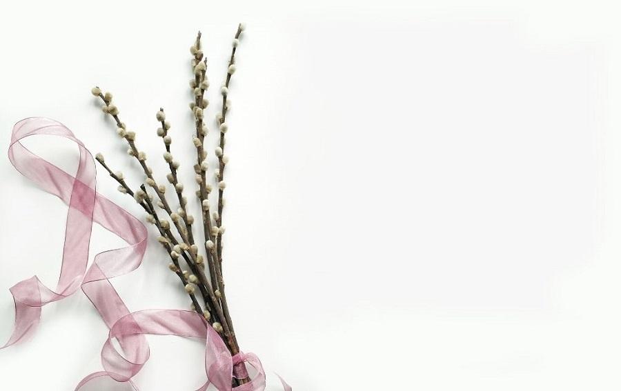 Grafika przedstawia pęczek bazi udekorowanych różową wstążką