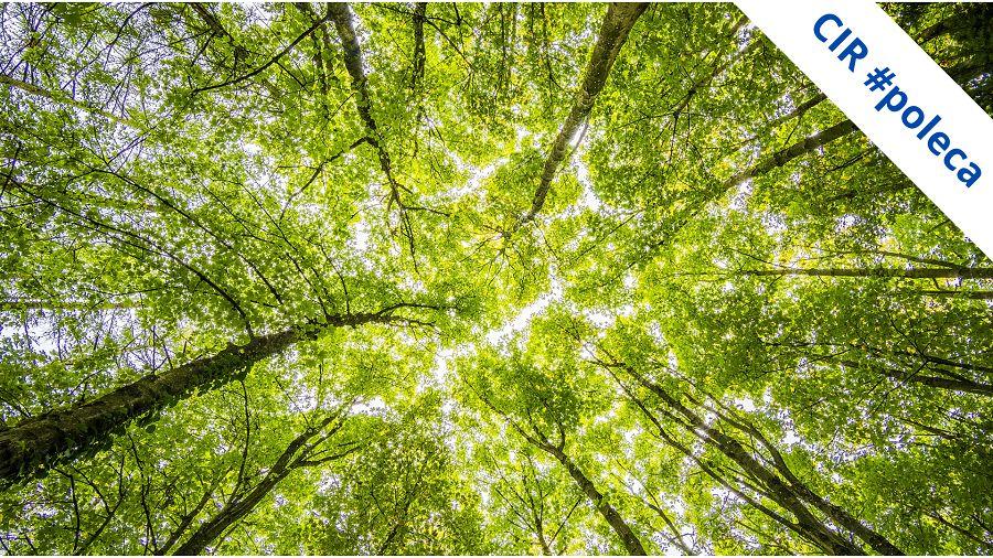 """Zdjęcie przedstawia korony drzew widziane z poziomu ziemi. Zasłaniają one prawie całe niebo. Błękit przebija tylko gdzieniegdzie.  W prawym, górnym rogu widać szarfę z napisem """"CIR poleca"""""""